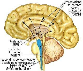 RAS(網様体賦活系)|脳の中の情報の取捨選択